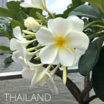 Thailnad_day3_1